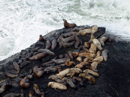 Pile-o-Seals